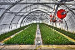 greenhouse-2546692_1920