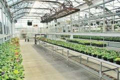 greenhouse-3247271_1920
