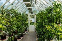 greenhouse-454510_1920