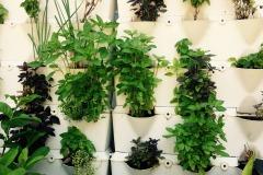 herbs-2278909_1920